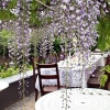 huis-broeckmeulen-tuin-01
